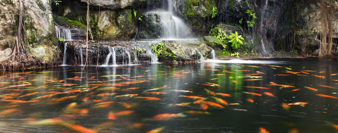fish-care-koi-care-plant-care-products
