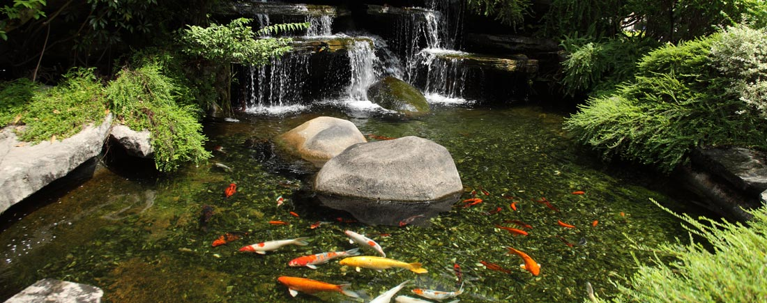 pond-construction-products-supplies