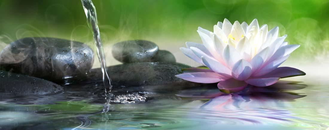 pond-filtration-and-pond-care