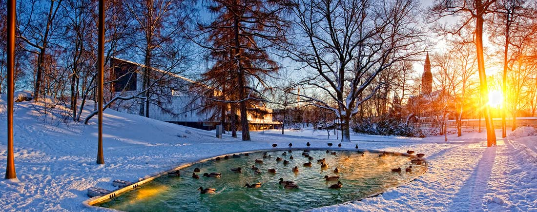 winter-pond-care-checklist